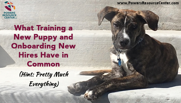 graphic that says what training a new puppy and onboarding new hires have in common